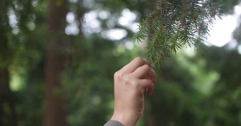 hand fir tree