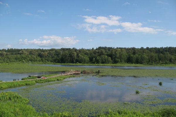 burnaby-lake-3