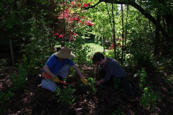 coleman creek restoration May 2019